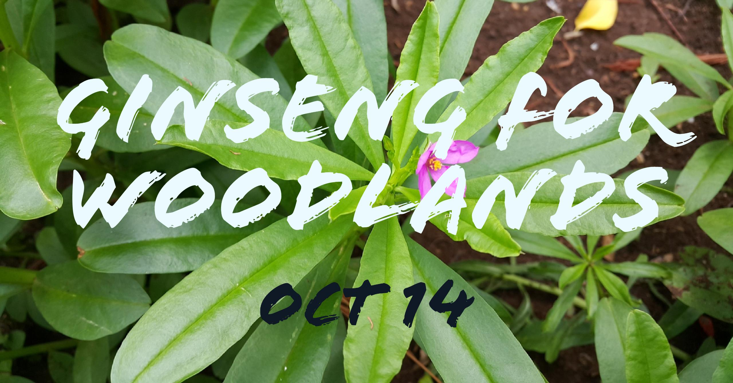 Ginseng for Farm Woodlands